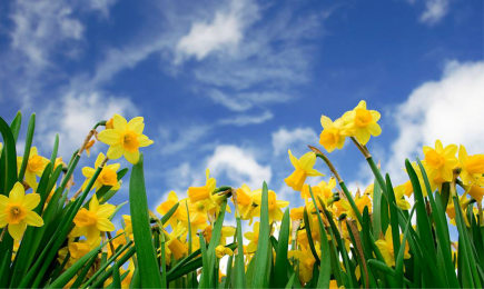 The Benefits of Spring